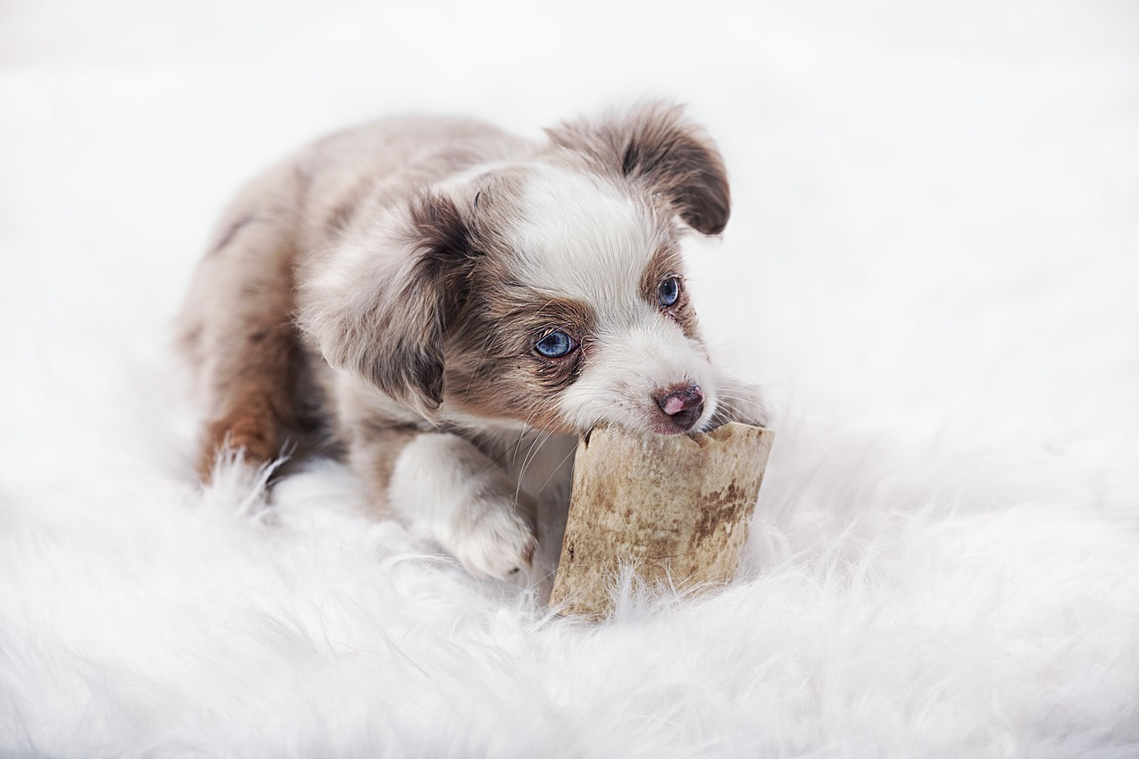 Voorbereiden op een hond